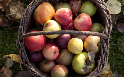 košík s jablky